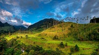 Valle del Cocora / Vallée de Cocora (Colombia)