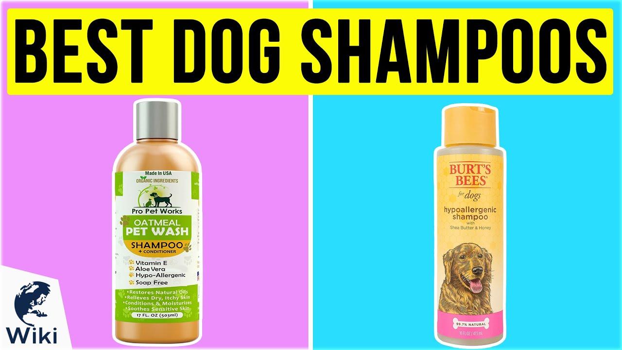10 Best Dog Shampoos 2020