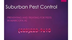 Maricopa AZ Pest Control - Pest Control Service in Maricopa AZ