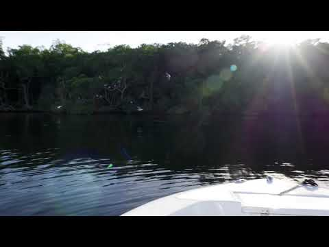 How To Use The Bait And Chum Bat | Lee Fisher Sports