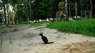 Гигиеничный кот