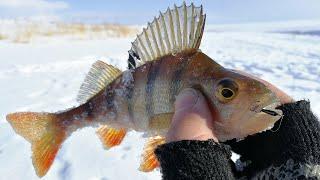 ВСЕ, КОНЧИЛАСЬ ЗИМНЯЯ РЫБАЛКА 2020! Ловля плотвы и окуня на мормышку, рыбалка с эхолотом Практик