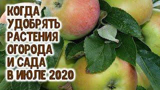Когда удобрять растения огорода и сада в июле 2020 года? Агрогороскоп подкормок растений