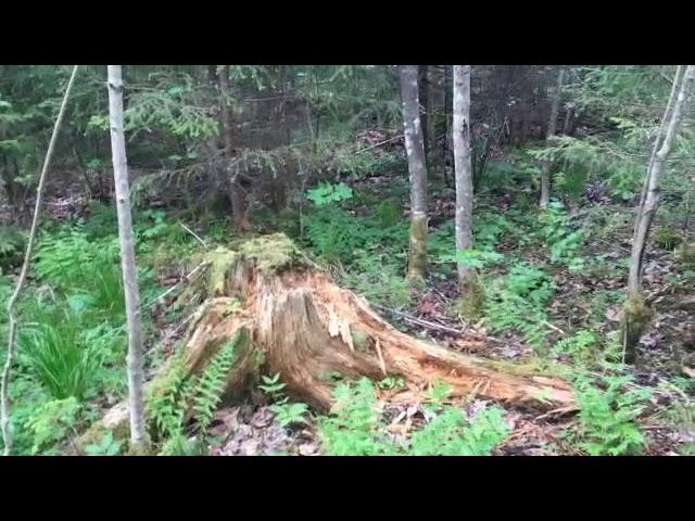 Filosofía en el bosque 11. La perception 1.