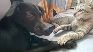 DOG AND CAT,PLAYING IN THE COUCH