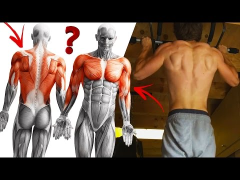 Which Muscles Do PULL UPS Build? (30 Chin Up, Pull up, Muscle up.. VARIATIONS!)