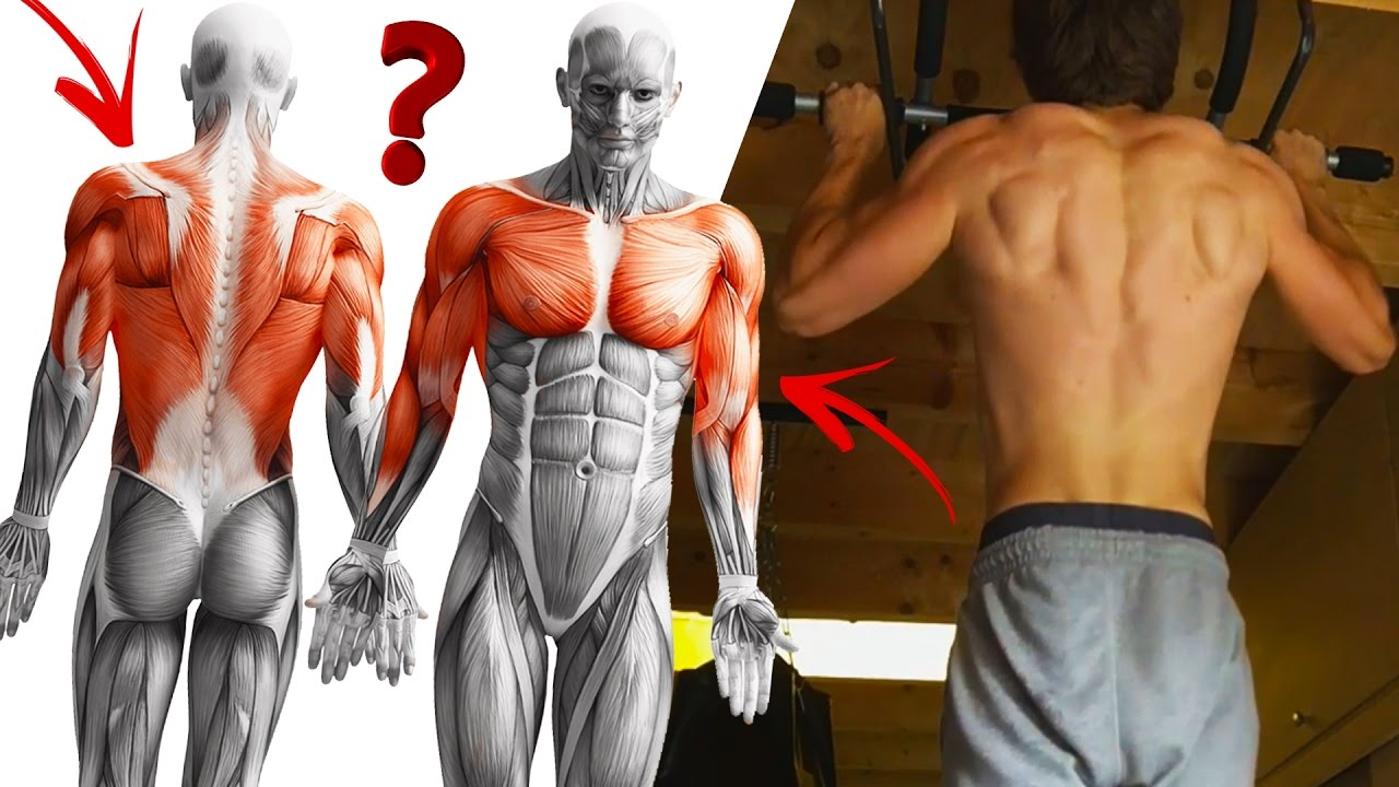 which muscles do pull ups build? (30 chin up, pull up, muscle up, Muscles