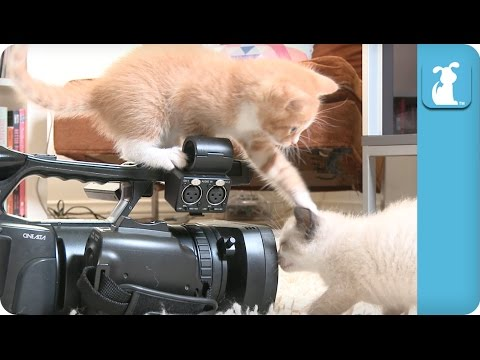 Kitten Directors Are High Maitenance - Kitten Love