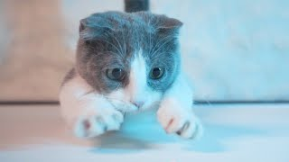 [Vlog] Kitten Loves To Play Fetch