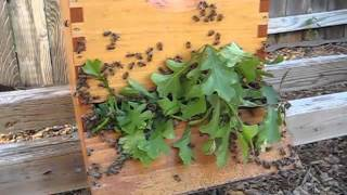 Beekeeping: How To Move A Hive Any Distance (more Than 3 Feet And Less Than 3 Miles)