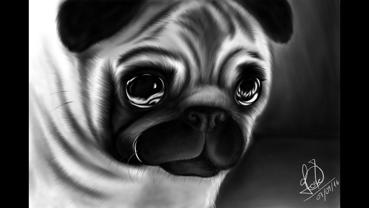 Dibujando un perro pug paso a paso artflow youtube for Imagenes de un estanque para colorear