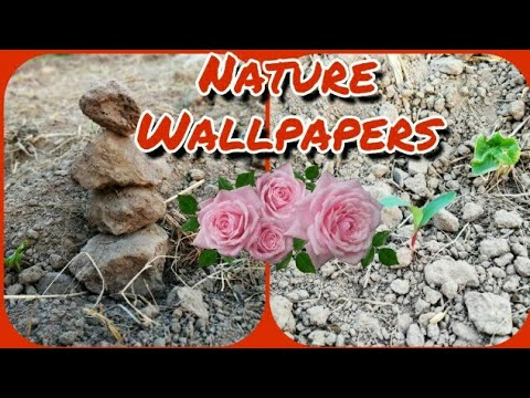 WOW! Beautiful Nature Wallpapers || Nature Wallpaper For Mobile || Wallpapers For Mobile