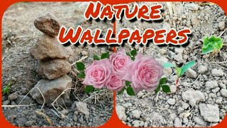 Wow! Beautiful Nature Wallpapers    Nature Wallpaper For Mobile    Wallpapers For Mobile