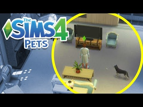 DECORATING OUR HOUSE! | Sims 100 Cats & Dogs Challenge #4