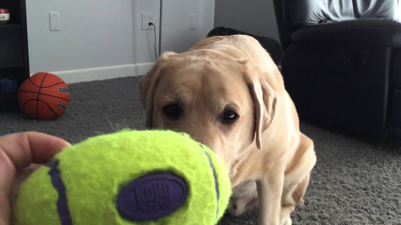 Best Dog Toys for Strong Chewers - This works for Logan! - YouTube | Dog Toys For Extreme Chewers