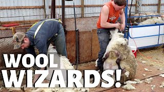 how-when-why-we-shear-our-sheep-vlog-235