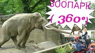 360 градусов Мир  диких животных
