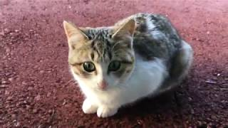 猫 #野良猫 我が家に猫がやってきました。 今まで猫と触れ合ったことがないので家族全員興味津々! 暖かく見守っていただけると嬉しいです。