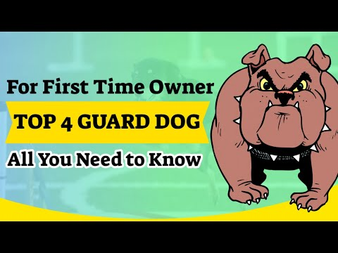 🐶-the-4-best-guard-dog-for-first-time-owner.-all-you-need-to-know-🤓