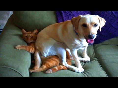 Perros sentados encima de gatos 2015 [HD] Recopilación Gatos y perros chistosos
