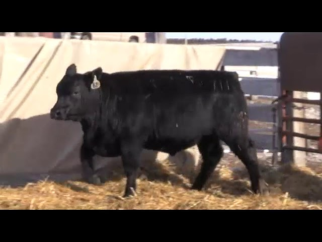 Marcy Cattle Company Lot 62