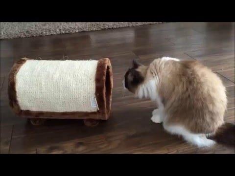 Ох уж эти смешные кошки. Забавные кошки - сборник