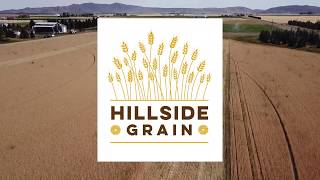 Hillside Grain & Mill '19 Wheat Harvest