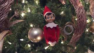 Real Life Elf on the Shelf