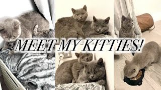 BRINGING MY NEW KITTENS HOME - BRITISH SHORTHAIR BABY GIRLS!