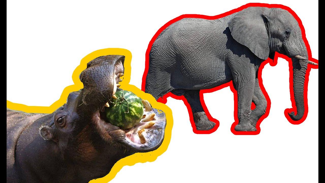 CON GÌ ĐÂY   CÁC CON VAT  NHẠC THIẾU NHI HAY Con Bò, Lợn, Chó, Mèo, Vịt,  Gà, Báo #11 - YouTube