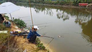 Câu cá chép sông cá lôi mất phao