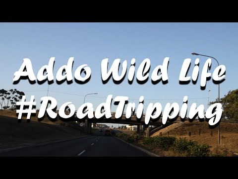 Addo Wild Life Road Tripping all the way from Port Elizabeth to Addo