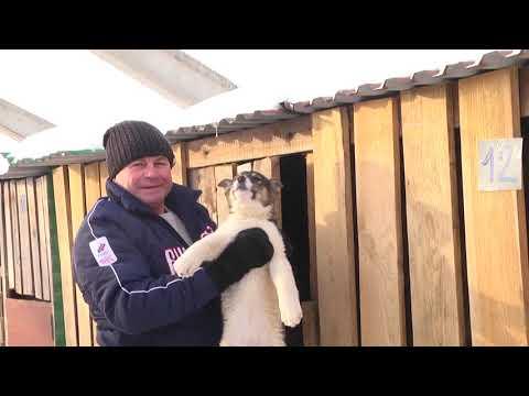 """Собачий приют """"Надежда"""" г. Азнакаево"""
