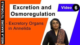 Excretion and Osmoregulation - Excretory Organs in Annelida