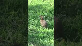 #funny #Rabbit  #joke #justforlaughs