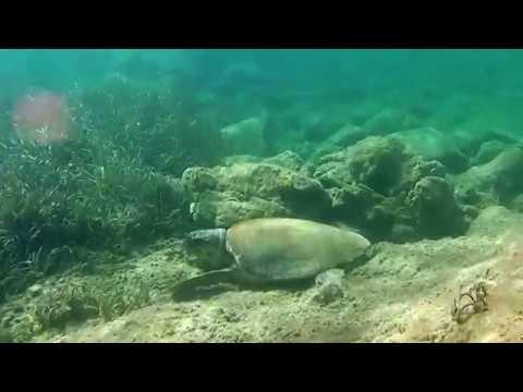 Underwater Greece 2016