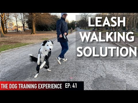 How Im Training My Dog To Walk On Leash (Some people might not agree with this!)