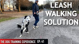 How I'm Training My Dog To Walk On Leash (Some people might not agree with this!)