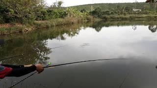 Câu cá giải trí và phong cảnh nông thôn của mình