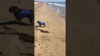 Beach life. Doggy holidays