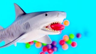 Learn Animals With Funny Dinosaur Baby Shark Wild Zoo Animals Names Surprise for Children