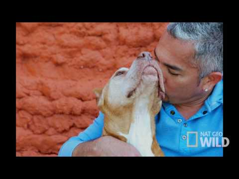 Cesar Millan's Dog Nation: Los Angeles 'Dad And Daddy'
