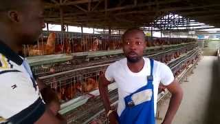 Poultry - An investment destination for all