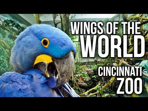 Zoo Tours Ep. 34: The Wings of the World || Cincinnati Zoo