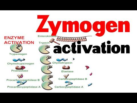 Zymogen activation