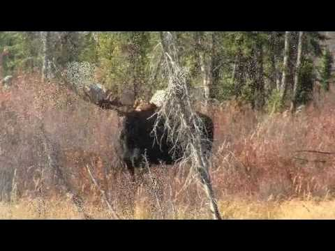 2010 Yukon Moose Hunt