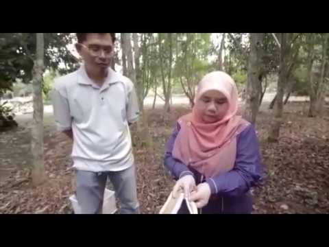 Rise@Uni 2018: Agarwood Artificial Inducer from Universiti Tun Hussein Onn Malaysia (UTHM)