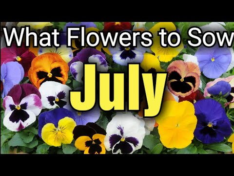 What FLOWERS can you sow from SEED in July / Gardening Online