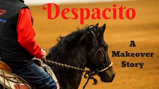 Despacito's Mustang Magic Makeover story, from crazy mustang to phenomenal endurance horse