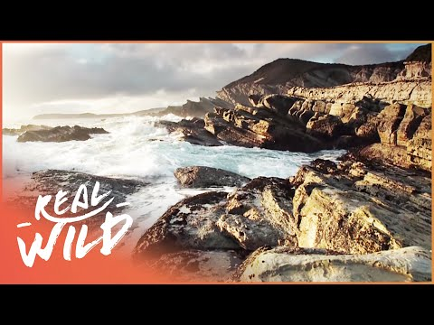 Wild Coasts [New Zealand Documentary] | Wild Things